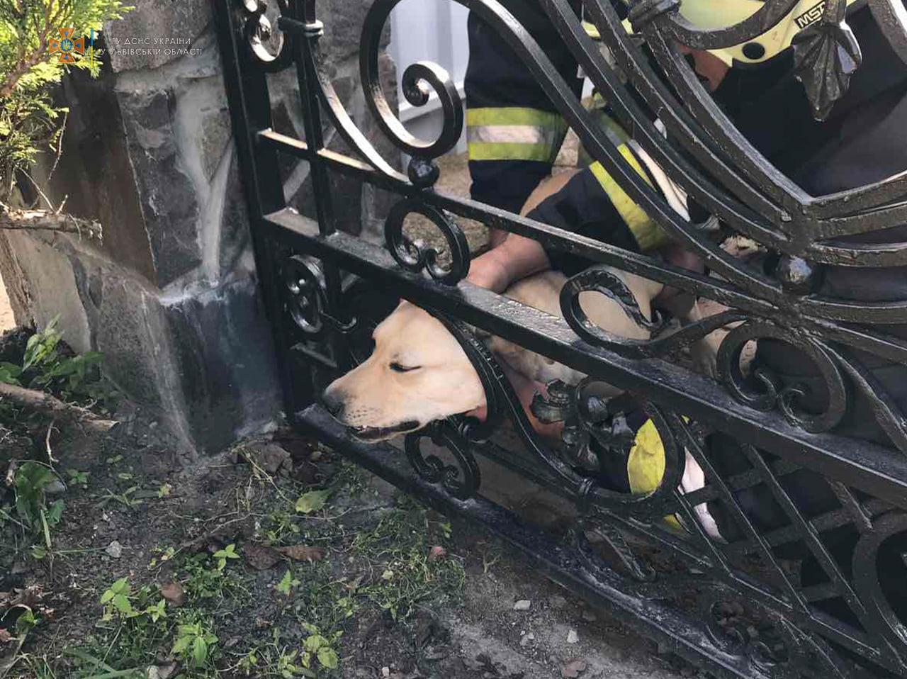 У Бродах рятувальники вивільнили собаку, який застряг в огорожі